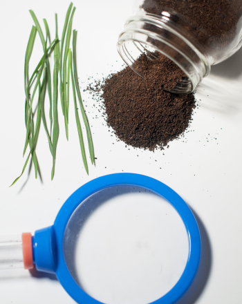 Middle School Science Science Projects: Soil Composition
