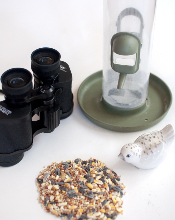 Middle School Science Science Projects: Feeder Bird Identification and Food Preference