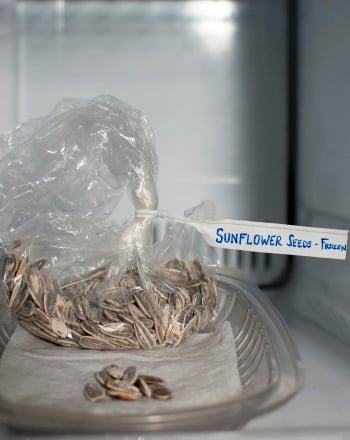 High School Science Science projects: Which Seeds Can Survive a Harsh Winter?