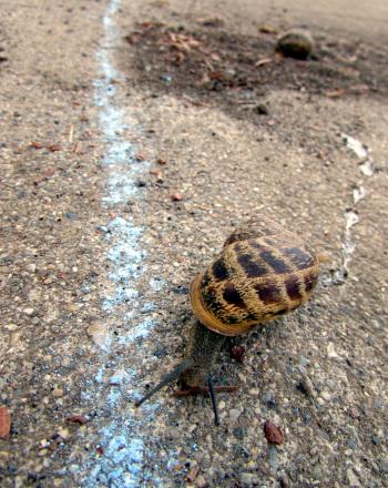 First Grade Science Science Projects: Speedy Snail Race