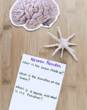 High School Science Science projects: Neuron Function