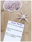 Science fair project that determines what neurons are, what they do and compiles this vital information in an illustrated book.