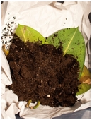 Science fair project that helps you create your own compost pile in order to test the efficiency of different methods of composting.