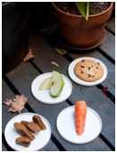 What do ants eat? Kids find out by observing a colony of ants in this cool zoology science fair project for 4th grade.