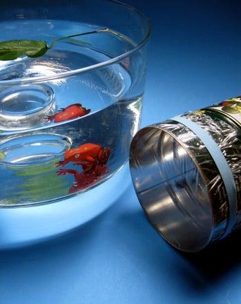 Preschool Science Activities: Craft an Underwater Viewer!