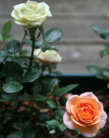 Preschool Math Activities: Plant a Garden