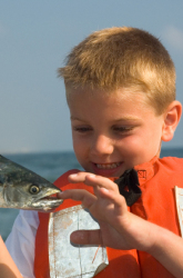 Can Eating Fish Harm Your Family?