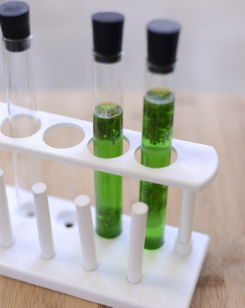Middle School Science Science Projects: Build Your Own Photobioreactor