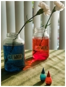 This science experiment tests whether warm or cold water works best in making cut flowers last longer.