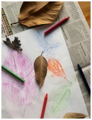In this project combining nature, art, math, and science, children make rubbings of leaves then observe shapes and structures and sort the leaf images.