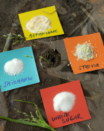 Fifth Grade Science Science projects: Why do Ants Like Sugar vs. Artificial Sweeteners?