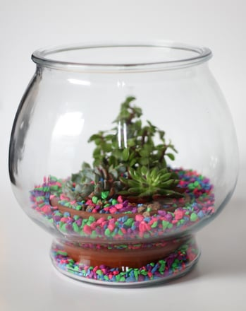 First Grade Arts & Crafts Activities: Make a Desktop Desert Terrarium