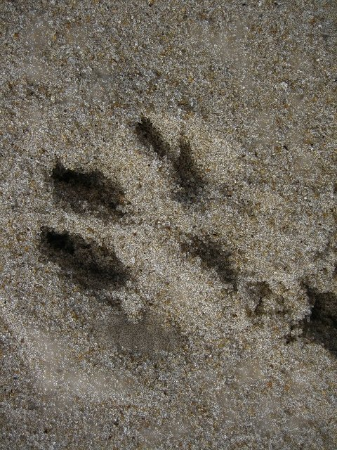 First Grade Arts & Crafts Activities: Make Dinosaur Footprints!
