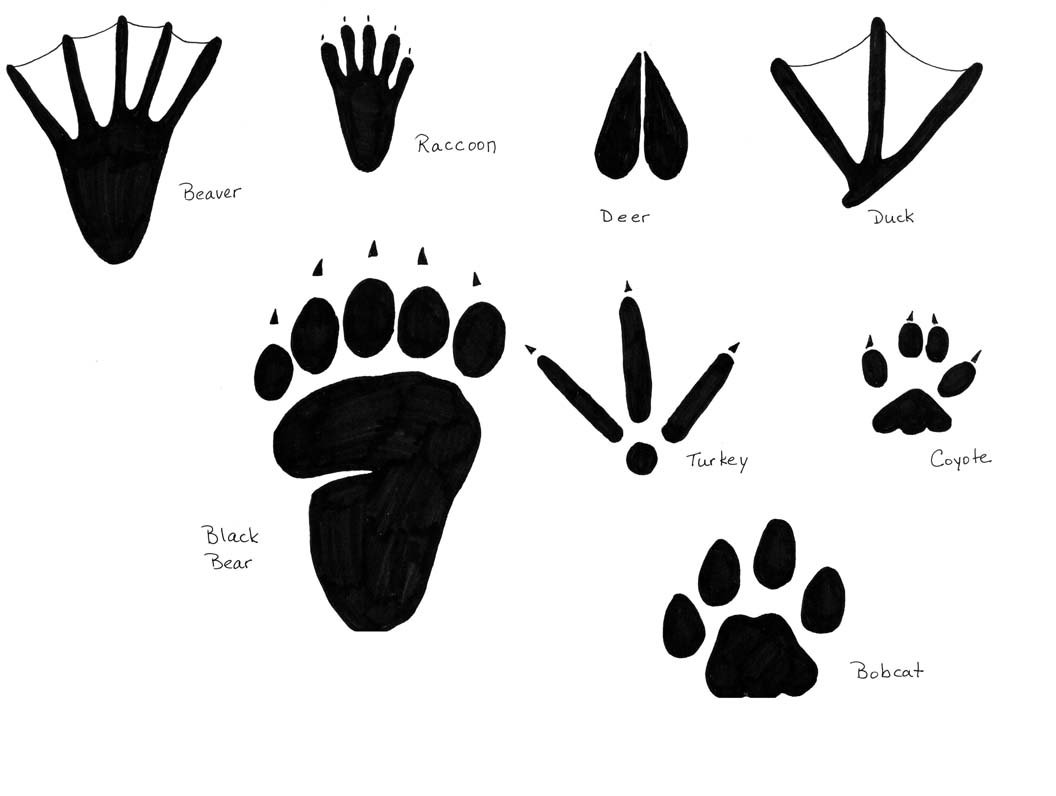 inspect animal tracks activity. Black Bedroom Furniture Sets. Home Design Ideas