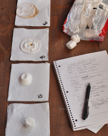 Third Grade Science Science projects: Sizing Up Marshmallows