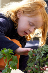 The Edible Schoolyard