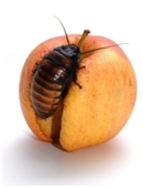 There are many benefits to bugs and insects. This science project shows how cockroaches, termites, and other critters benefit our planet.