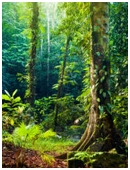 In this project, students will learn what and how foods are grown in rain forests and if there are sustainable methods that can be used.
