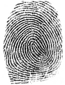 The objective of this science project is to investigate patterns in fingerprints among family members.