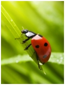 This science project lets students explore the number of spots on a ladybird and how to treat ladybugs with respect.