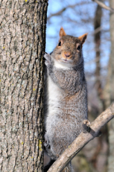Fifth Grade Science Science Projects: Squirrels and Their Surroundings: The Relationship Between Camouflage and Habitat