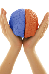 Middle School Science Science Projects: Which Side of the Brain Draws the Best?