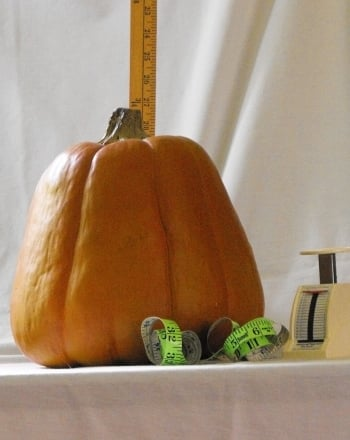 Fourth Grade Holidays & Seasons Activities: Pumpkin Measurements