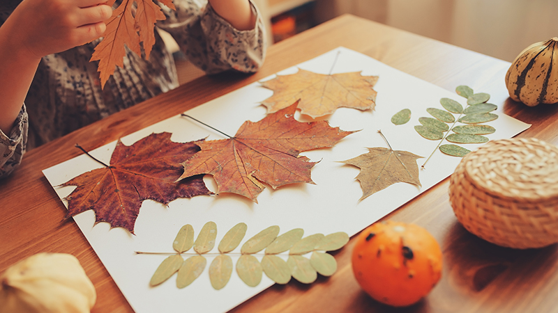 Science activities to do with your family outside this fall