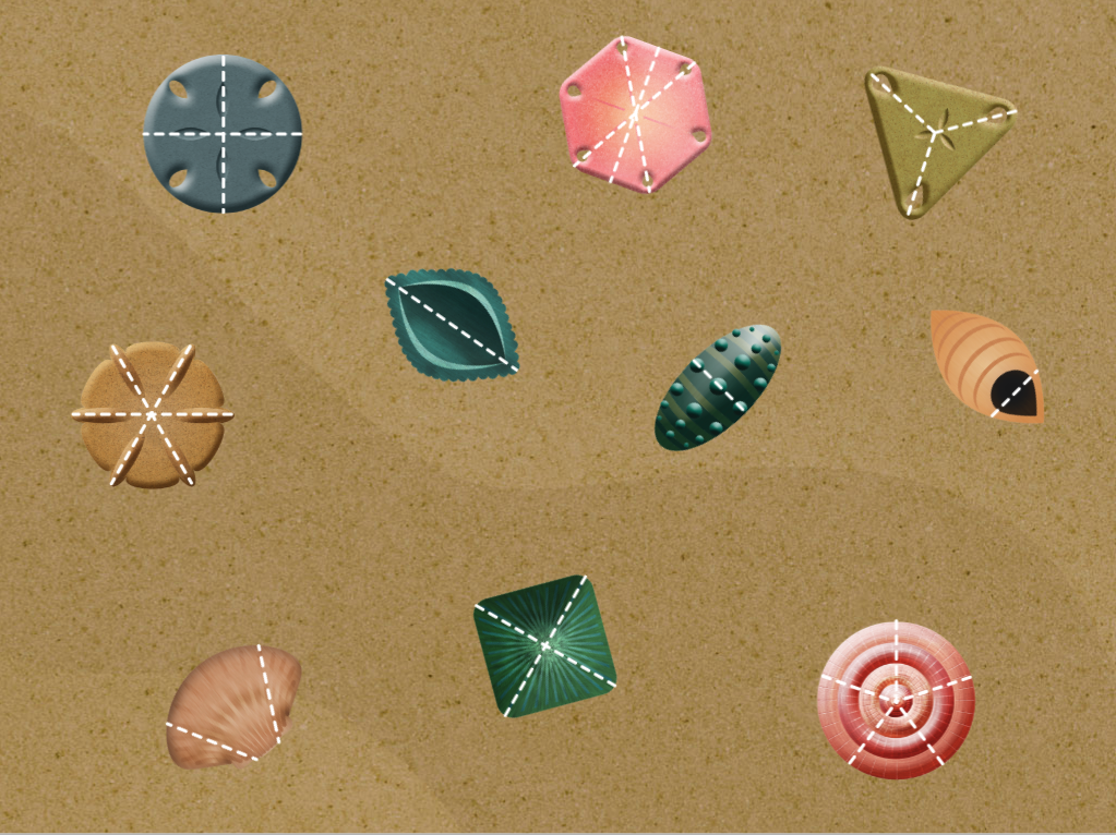 3rd grade Math Games: Seashell Fractions