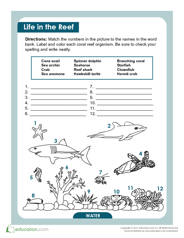Coral Reef Creatures | Lesson Plan | Education.com