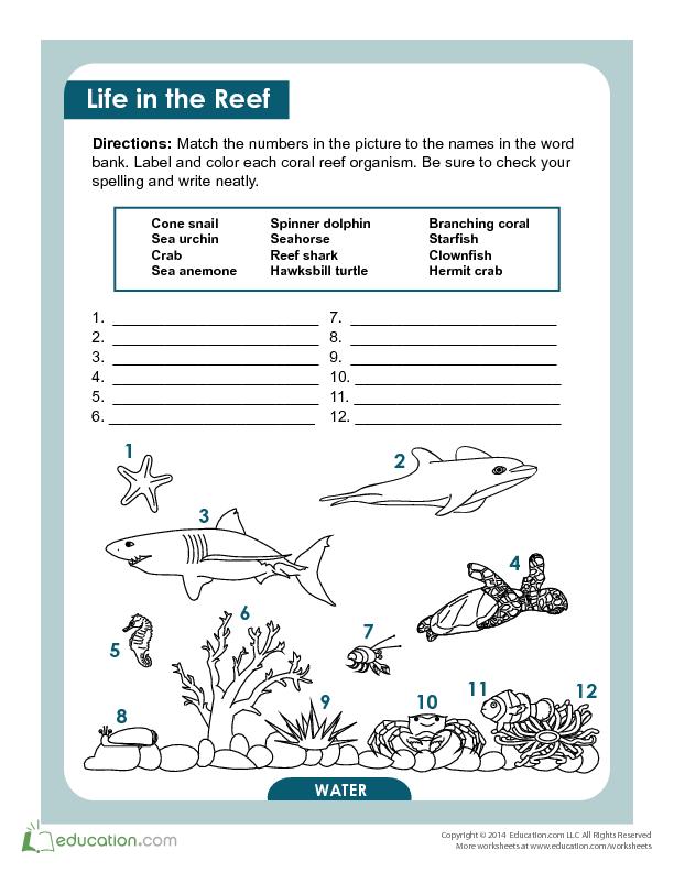 Coral Reef Creatures   Lesson Plan   Education.com