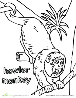 howler monkey coloring page - fact or opinion part 1 lesson plan