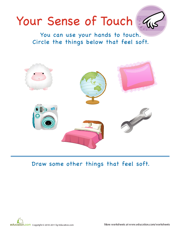 My Five Senses - Circle the Objects You Can Touch