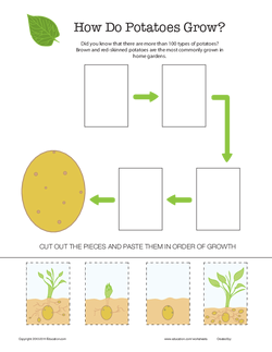 How Do Potatoes Grow
