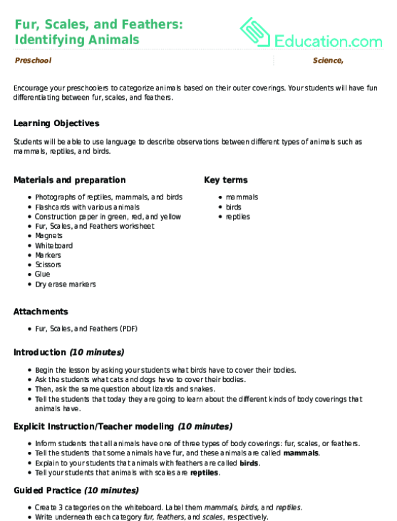Animals And Offspring Lesson Plan Education Lesson Plan