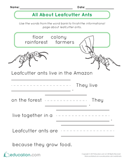 All About Leafcutter Ants