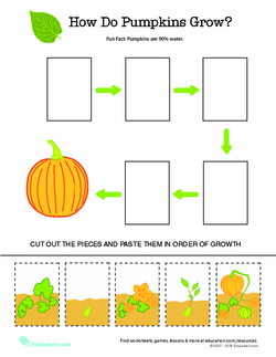 How Do Pumpkins Grow?