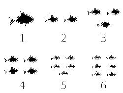 Fish Flash Cards