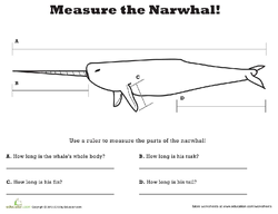 Measure the Narwhal