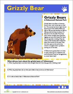 Grizzly Bears handout