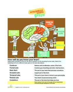 The Incredible Human Brain