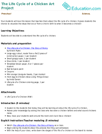 graphic relating to Life Cycle of a Chicken Printable identify The Everyday living Cycle of a Chook Artwork Challenge Lesson Application