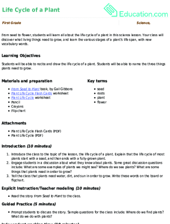 Life Cycle Of A Plant Lesson Plan Education