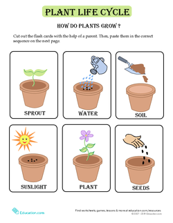 Plant Life Cycle Flash Cards