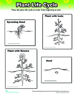 Life Cycle of a Plant | Lesson Plan | Education com | Lesson