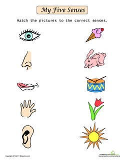 My Five Senses | Lesson Plan | Education com | Lesson plan