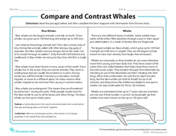 Compare and Contrast Whales