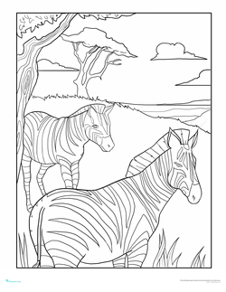 Color the Relaxing Zebras