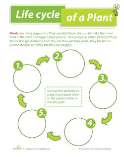 Parts of a Plant | Lesson Plan | Education com | Lesson plan