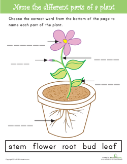 Name the Parts of a Plant